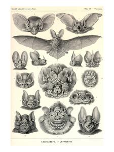 Bats by Ernst Haeckel