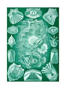 Collection of Teleostei from 'Kunstformen Der Natur', 1899 by Ernst Haeckel
