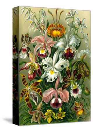 Different Varieties of Orchid, 1899