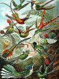 Moths -Tineida-Ernst Haeckel-Art Print