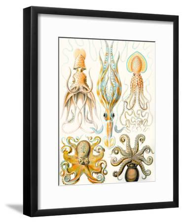 Examples of Various Cephalopods 'Kunstformen Der Natur', 1899