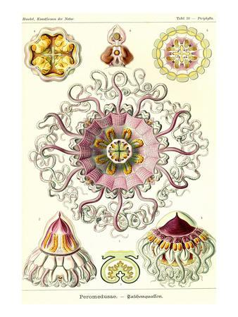 Kunstformen der Natur: Lacertilia, Graf... - E. Haeckel Premium-Poster Echsen