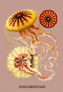 Jellyfish: Discomedusae by Ernst Haeckel