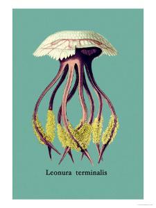 Jellyfish: Leonura Terminalis by Ernst Haeckel
