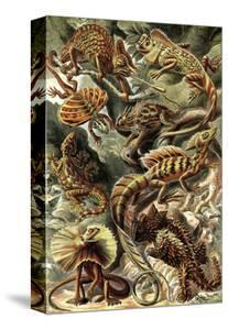 Lizards by Ernst Haeckel
