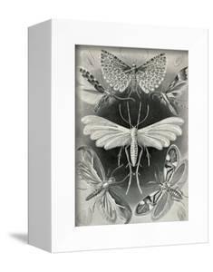 Moths -Tineida by Ernst Haeckel
