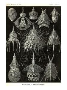 Radiolaria by Ernst Haeckel