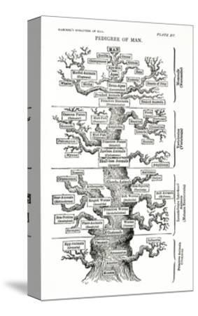 Tree of Life from the Evolution of Man