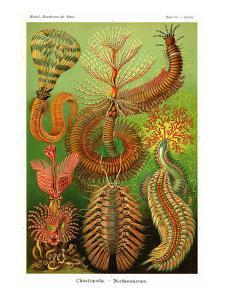 Worms by Ernst Haeckel