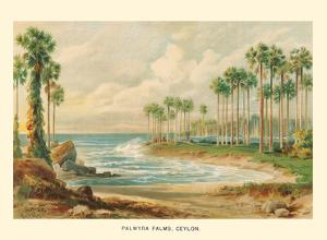 Palmyra Palm Trees (Toddy Palms) - Sri Lanka (Ceylon) by Ernst Heyn