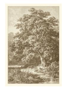 Sepia Oak Tree by Ernst Heyn