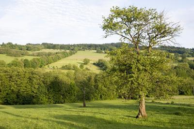 Scenery Vogelsberg, Hessen, Germany