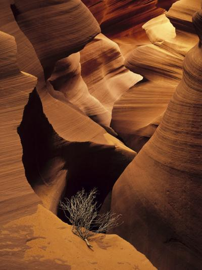 Eroded Sandstone and a Tumbleweed Branch in a Slot Canyon-Ralph Lee Hopkins-Photographic Print