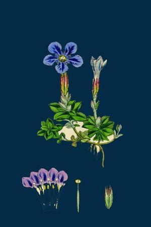 https://imgc.artprintimages.com/img/print/erysimum-orientale-hare-s-ear-cabbage_u-l-pvfblw0.jpg?p=0
