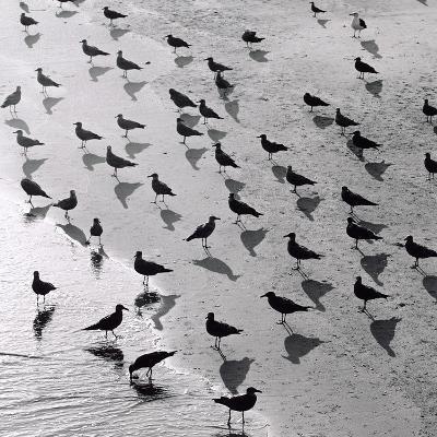 Escher's Seagulls-Michael Kahn-Giclee Print