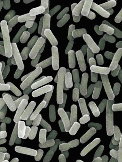 (Escherichia Coli) Bacteria, Commonly known as E. Coli, Sem X1-Richard Kessel-Photographic Print