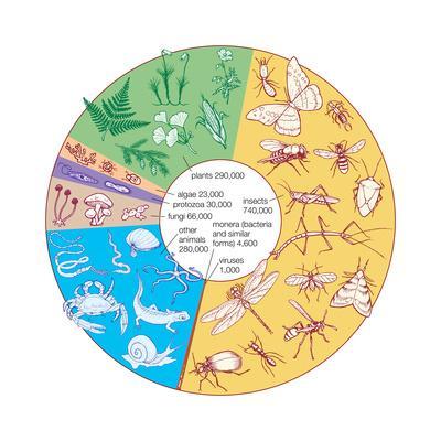 https://imgc.artprintimages.com/img/print/estimated-number-of-known-living-species-biosphere-earth-sciences_u-l-q135jcr0.jpg?p=0