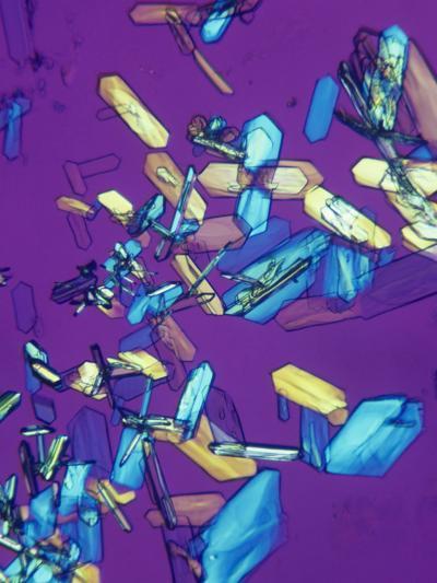 Estrone Estrogen Crystals, Polarized, LM X20-Arthur Siegelman-Photographic Print