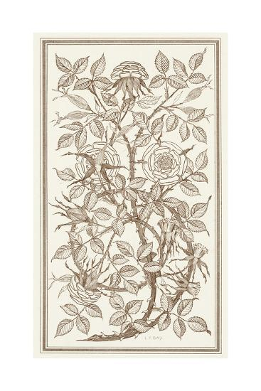 Etching of Roses on Tangled Branches--Art Print