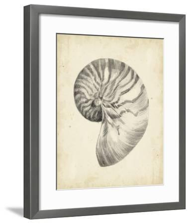 Antique Shell Study I