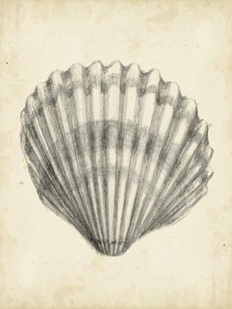 Antique Shell Study III by Ethan Harper