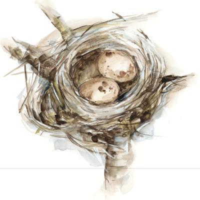 Bird Nest Study I by Ethan Harper