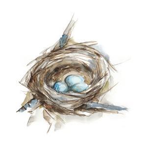 Bird Nest Study II by Ethan Harper