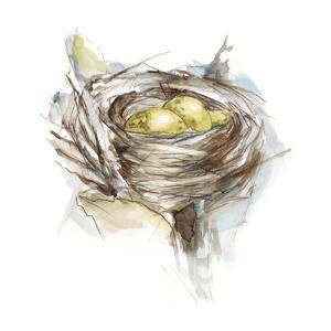 Bird Nest Study III by Ethan Harper