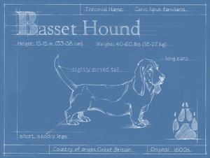 Blueprint Basset Hound by Ethan Harper