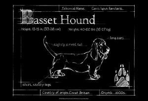 Blueprint Bassett Hound by Ethan Harper