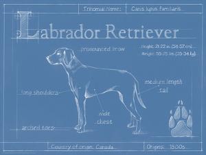 Blueprint Labrador Retriever by Ethan Harper