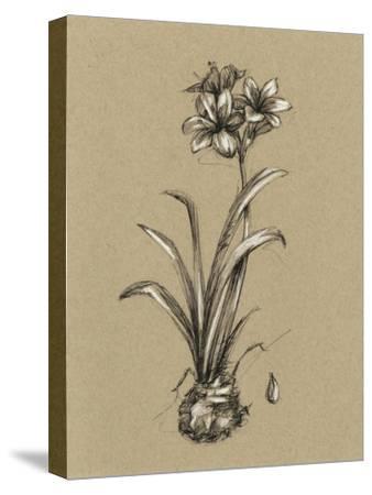 Botanical Sketch Black and White II