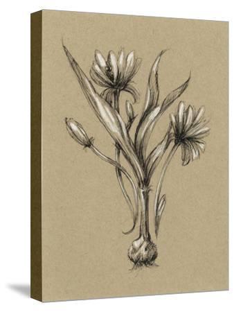Botanical Sketch Black and White III