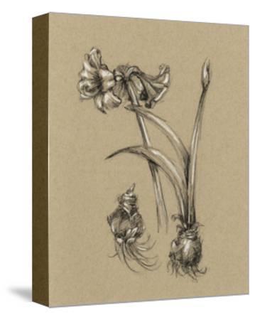 Botanical Sketch Black and White IV