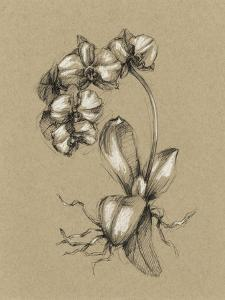 Botanical Sketch Black and White V by Ethan Harper