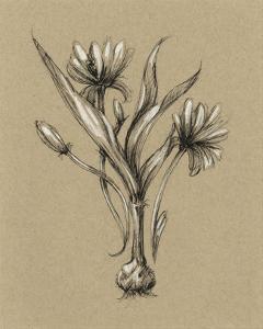 Botanical Sketch Black & White III by Ethan Harper