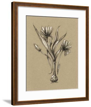 Botanical Sketch Black & White III