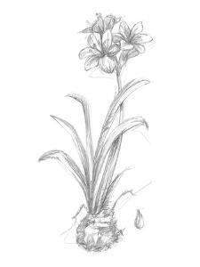 Botanical Sketch II by Ethan Harper