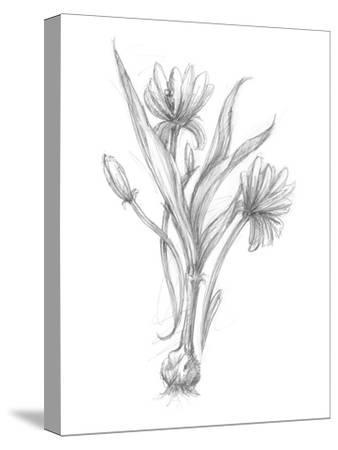 Botanical Sketch III