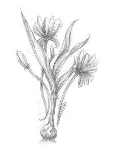Botanical Sketch III by Ethan Harper