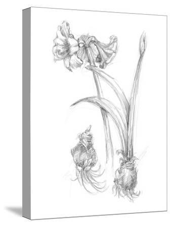 Botanical Sketch IV