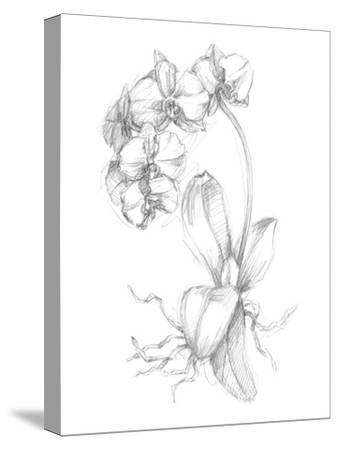 Botanical Sketch V