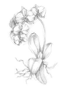 Botanical Sketch V by Ethan Harper