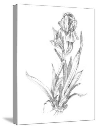 Botanical Sketch VI