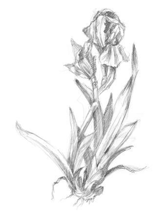 Botanical Sketch VI by Ethan Harper