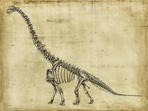 Brachiosaurus Study by Ethan Harper