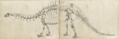 Dinosaur Study I by Ethan Harper