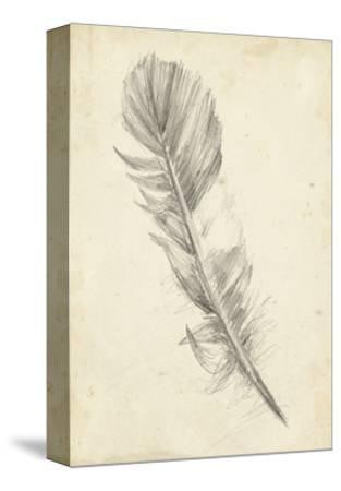 Feather Sketch I
