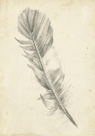 Feather Sketch I by Ethan Harper