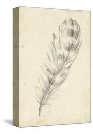 Feather Sketch II